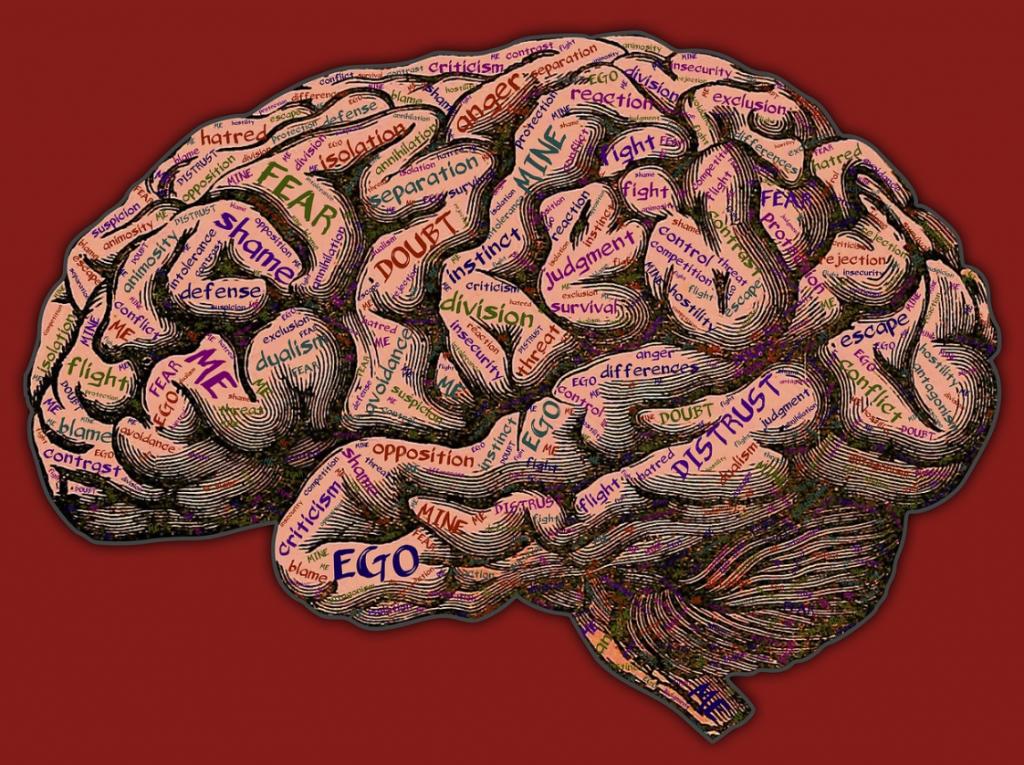 cerveau émotif